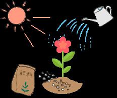 花には土、肥料、水、陽の光などが必要