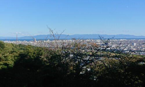 冬なのに大内観音山でひまわりが咲いていました。